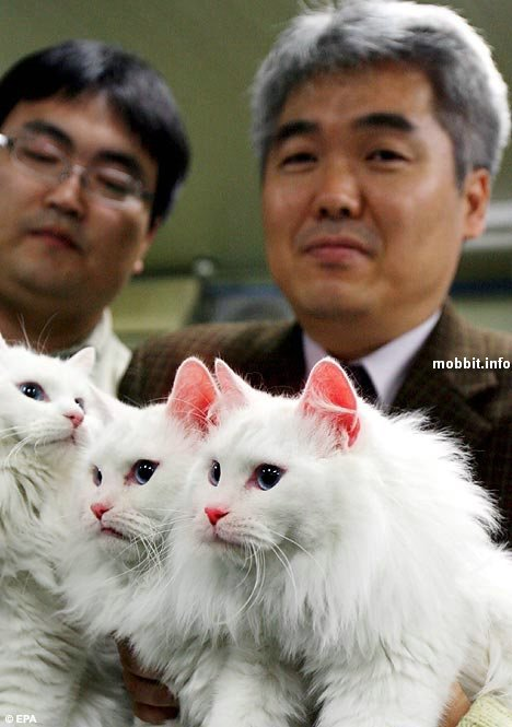 Cloned cats