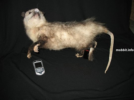 Text-O-Possum