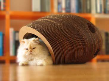 cat cocoon
