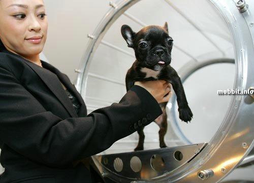 Кислородная терапия для собак