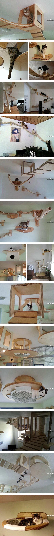 Мебель для… котов!