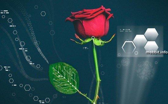 Первая в мире роза-киборг