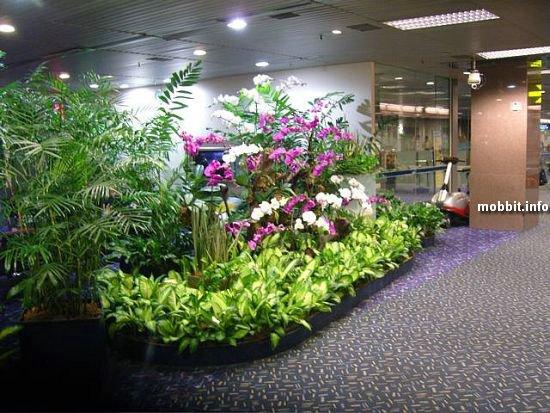 Растения, способные распознавать взрывчатые вещества