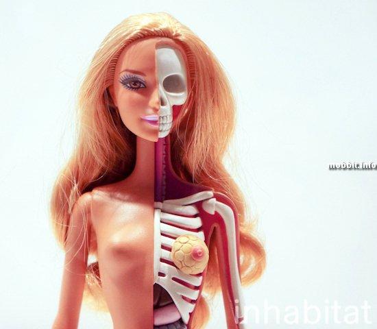 «Анатомическая» Барби и другие