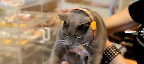 Первые в мире наушники для котов