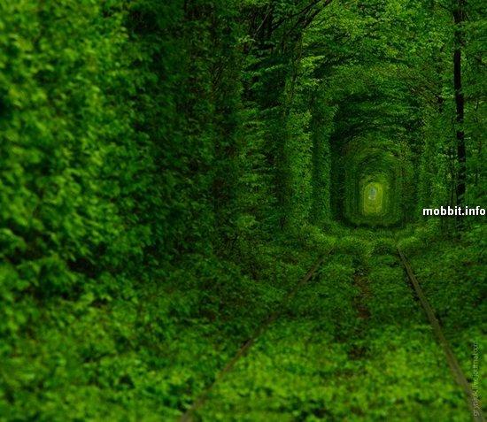 Чудеса рядом: зеленый тоннель любви