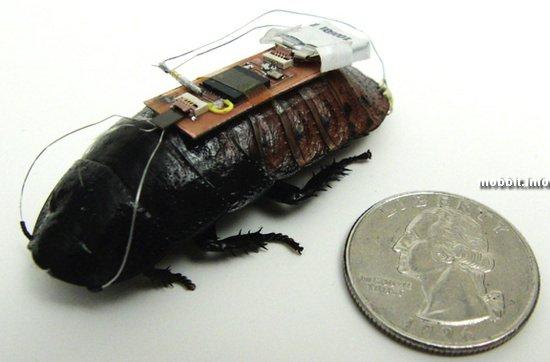 Полностью управляемые тараканы – реальность?