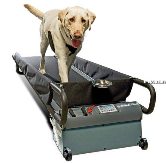 Беговая дорожка для… собак!