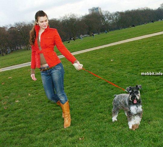 Странный поводок для собаки