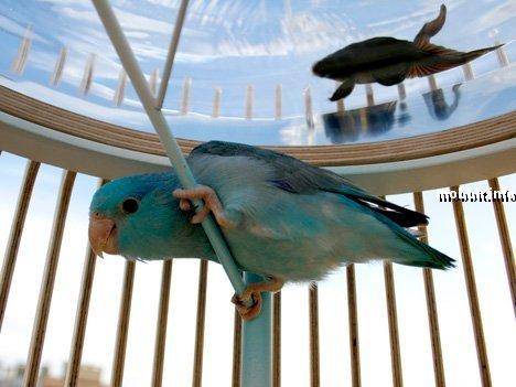 аквариум + клетка для птиц в одном