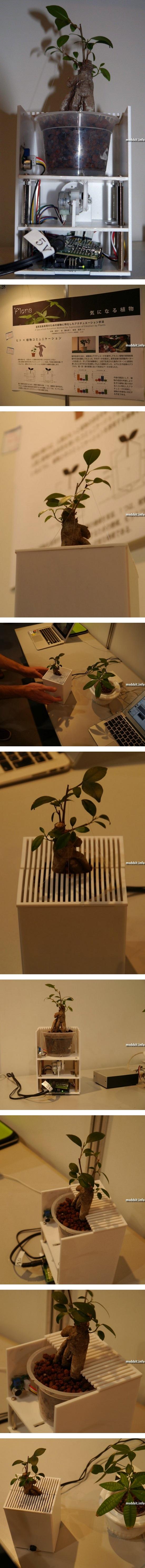 Система, позволяющая человеку понимать «чувства» растений