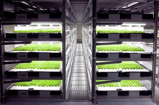 В 2017 году в Японии откроется ферма без людей